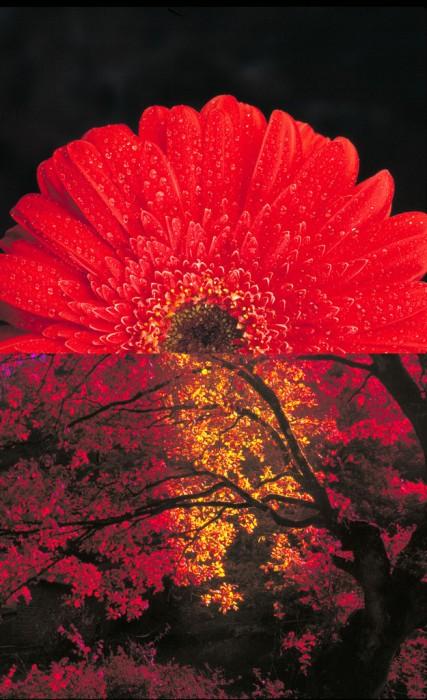 Flor. 160x100 cm.